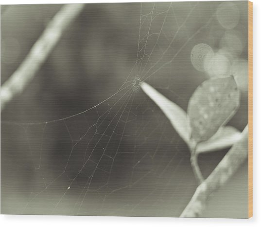 Spiderweb Wood Print