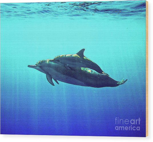 Spinner Dolphin With Baby Wood Print
