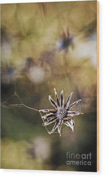 Spinnumwobner Bluetenstand Wood Print