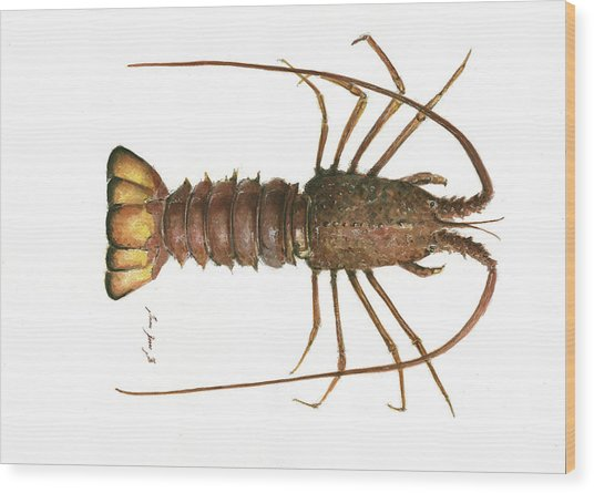 Spiny Lobster Wood Print
