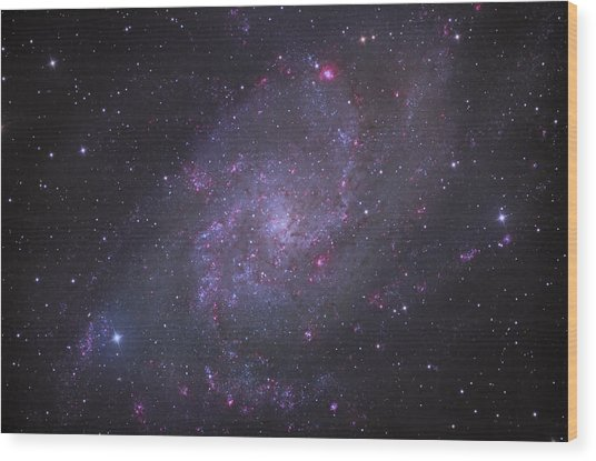 Spiral Galaxy M 33 Wood Print by Brian Peterson