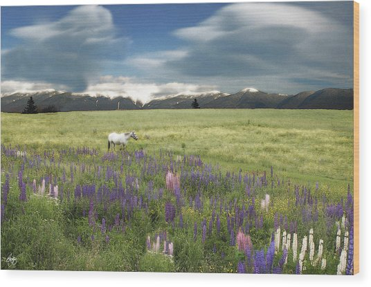 Spirit Pony In High Country Lupine Field Wood Print