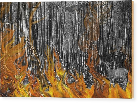 Spirits Of The Firestorm Wood Print by Diane C Nicholson