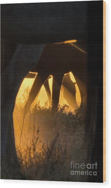 Spiritual Walker Wood Print by Nicole Markmann Nelson