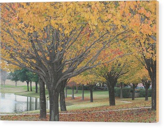 Splendid Park Wood Print by David Wahome