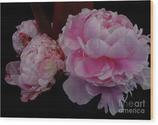 Splendor In Pink Wood Print