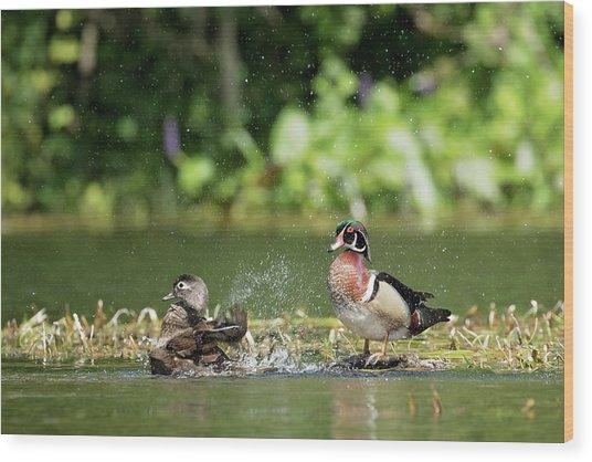 Splish Splash Wood Print