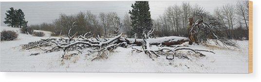 Split Personality - Panorama Wood Print