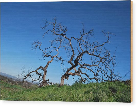 Split Single Tree On Hillside Wood Print