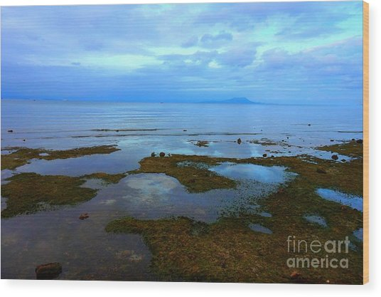 Spooky Morning Tide Receded From Beach Wood Print