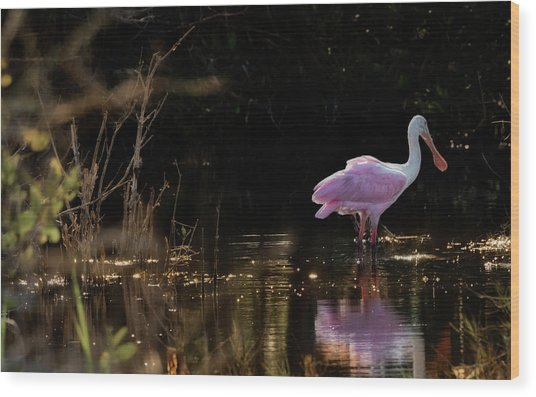 Spoonbill Fishing For Supper Wood Print