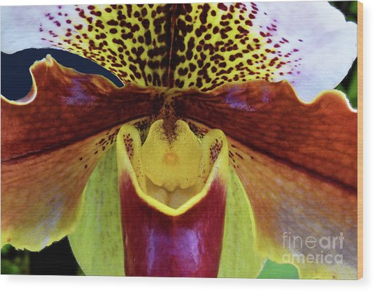 Spotted Paphiopedilum Orchid Detail  Wood Print