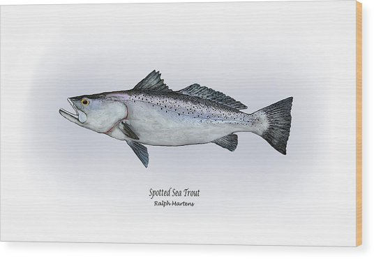 Spotted Sea Trout Painting By Ralph Martens