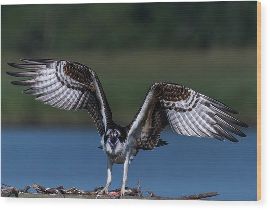 Wood Print featuring the photograph Spread Your Wings by Cindy Lark Hartman