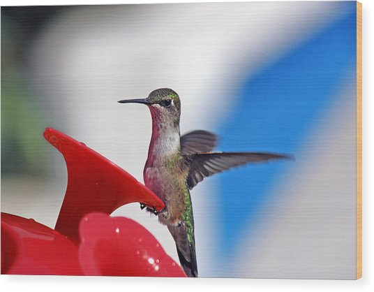 Spreading My Wings  Wood Print