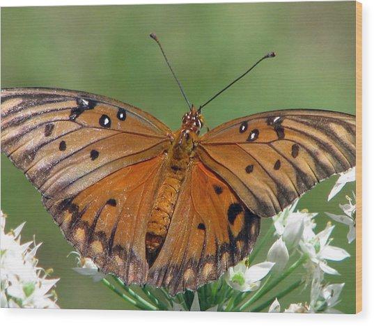 Spreading My Wings Wood Print by Dottie Dees