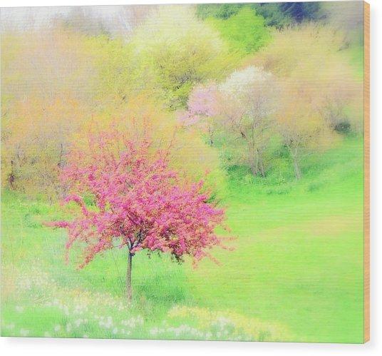 spring at Highland Park  Wood Print
