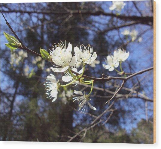 Spring Blooms Wood Print by Jennifer Coleman