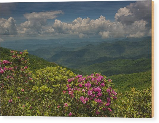 Spring Blooms On The Blue Ridge Parkway Wood Print