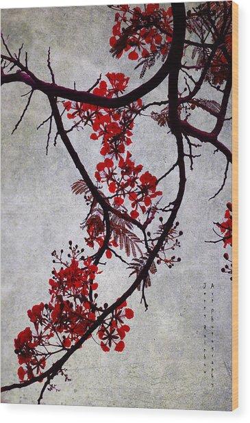Spring Bloosom In Maldives. Flamboyant Tree II. Japanese Style Wood Print