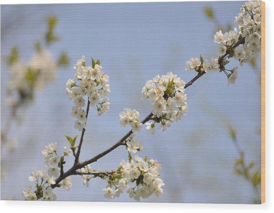 Spring Blossom Wood Print by Gwen Allen