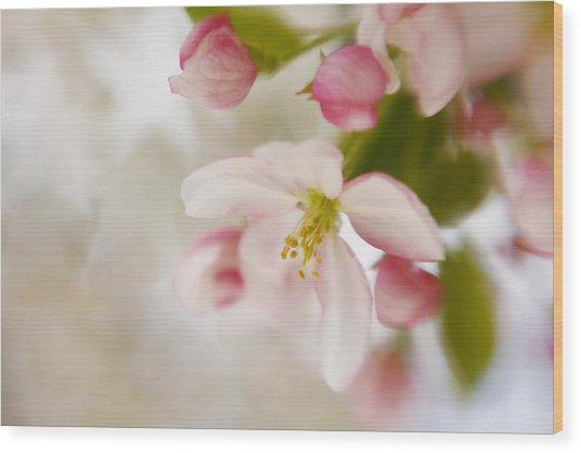 Spring Blossom Whisper Wood Print