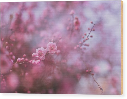 Spring Blossoms In Their Beauty Wood Print