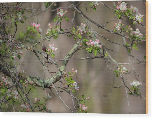 Spring Blossoms 2 Wood Print