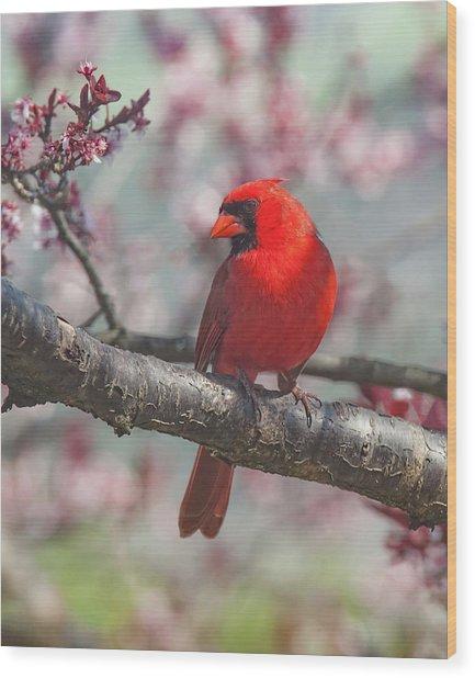 Spring Cardinal 2 Wood Print
