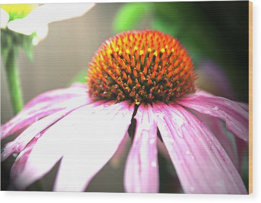 Spring Colors Wood Print by Becca Brann