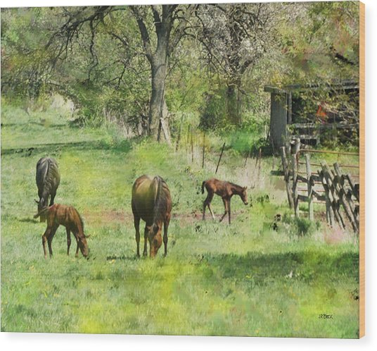 Spring Colts Wood Print