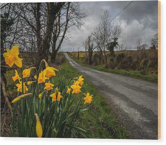Wood Print featuring the photograph Spring Daffodils On An Irish Country Road by James Truett
