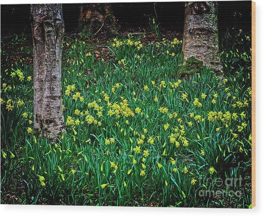 Spring Daffoldils Wood Print