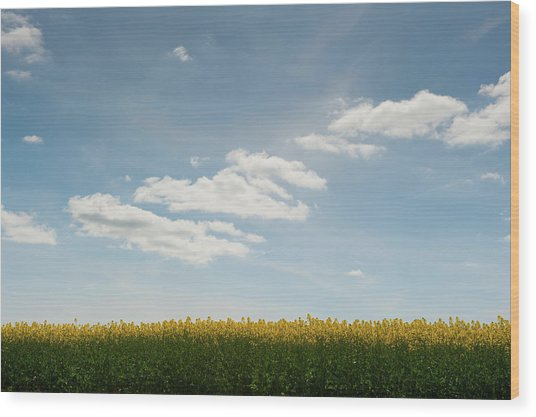 Spring Day Clouds Wood Print