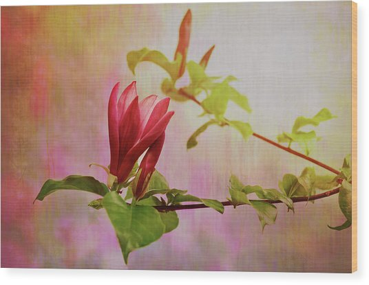 Spring Flare Wood Print