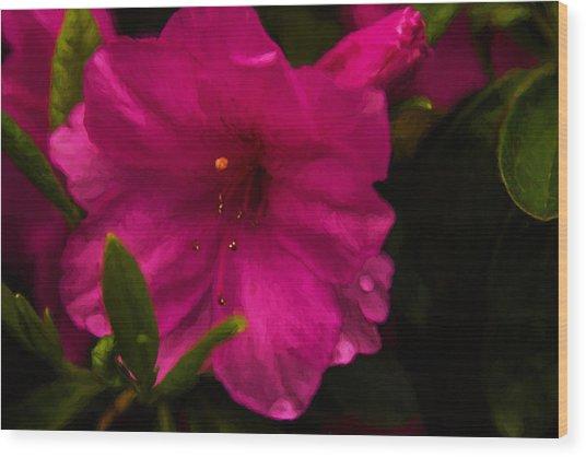 Spring Flowering Beauty - Azalea Floral Wood Print by Barry Jones