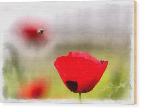 Spring Flowering Poppies Wood Print