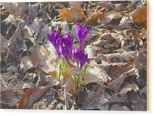 Spring Gathering Wood Print