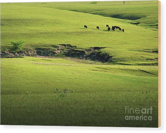 Spring Grazing Wood Print