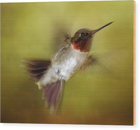 Spring Hummingbird Wood Print