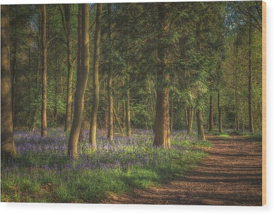 Spring In Haywood No 2 Wood Print