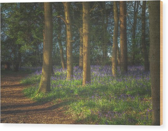 Spring In Haywood No 3 Wood Print