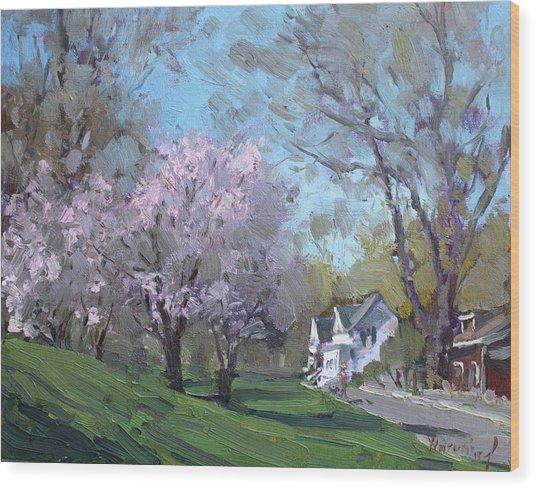 Spring In J C Saddington Park Wood Print