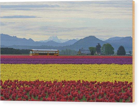 Spring In Skagit Valley Wood Print