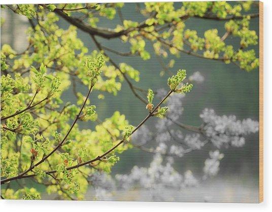 Spring In The Arboretum Wood Print