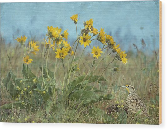 Spring In The Meadows Wood Print