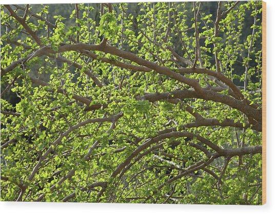 Spring Is Here Wood Print