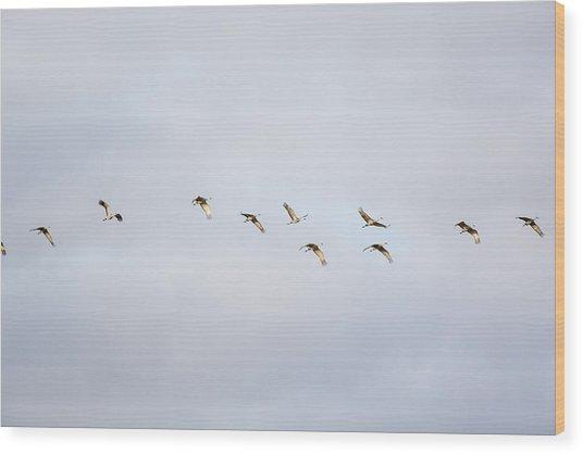 Spring Migration 2 Wood Print