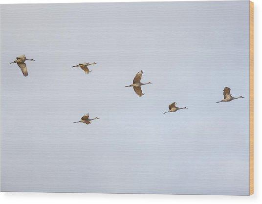 Spring Migration 4 Wood Print