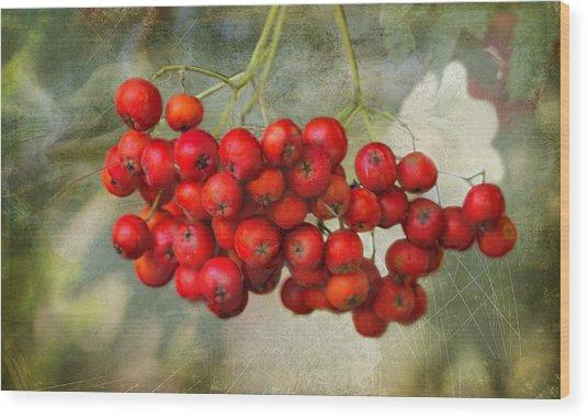 Spring Mountain Ash Berries  Wood Print
